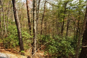 <p>tn land for sale, homesites for sale, mountain view land for sale</p>