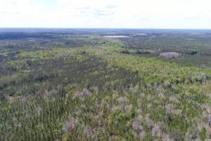 143.83 Acre Recreational Timber Investment in McIntosh, GA (2 of 25)