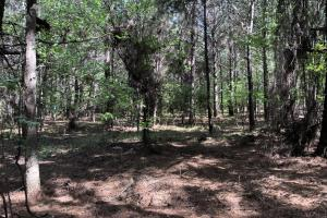 143.83 Acre Recreational Timber Investment in McIntosh, GA (15 of 25)