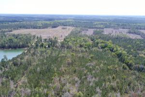 143.83 Acre Recreational Timber Investment in McIntosh, GA (5 of 25)