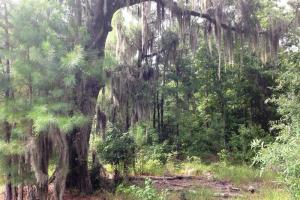 143.83 Acre Recreational Timber Investment - McIntosh County GA