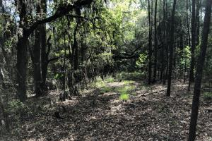 143.83 Acre Recreational Timber Investment in McIntosh, GA (20 of 25)