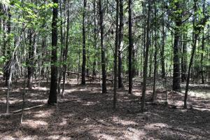 143.83 Acre Recreational Timber Investment in McIntosh, GA (17 of 25)