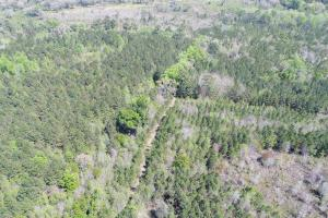 143.83 Acre Recreational Timber Investment in McIntosh, GA (12 of 25)