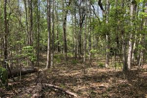 143.83 Acre Recreational Timber Investment in McIntosh, GA (21 of 25)