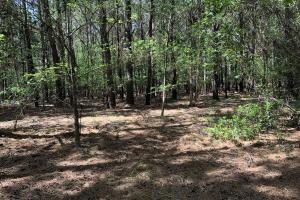 143.83 Acre Recreational Timber Investment in McIntosh, GA (16 of 25)