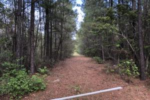143.83 Acre Recreational Timber Investment in McIntosh, GA (8 of 25)