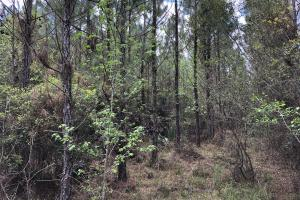 143.83 Acre Recreational Timber Investment in McIntosh, GA (13 of 25)