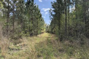 143.83 Acre Recreational Timber Investment