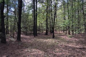 143.83 Acre Recreational Timber Investment in McIntosh, GA (14 of 25)