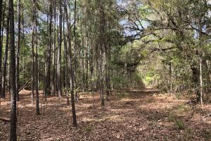 143.83 Acre Recreational Timber Investment in McIntosh, GA (19 of 25)