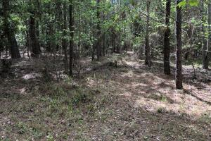 143.83 Acre Recreational Timber Investment in McIntosh, GA (6 of 25)