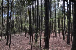 143.83 Acre Recreational Timber Investment in McIntosh, GA (3 of 25)