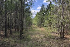 143.83 Acre Recreational Timber Investment in McIntosh, GA (22 of 25)