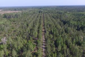 Recreational Timber Investment in Nassau County - Nassau County FL
