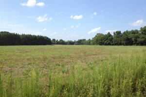 Private Farming Estate - Marlboro County SC