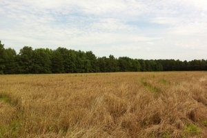 Eutawville Farming and Recreational Tract  - Orangeburg County SC