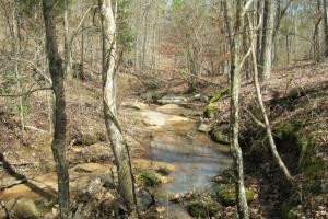 National Forest Hunting Land - Union County SC