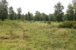 Rural Equestrian Homesite