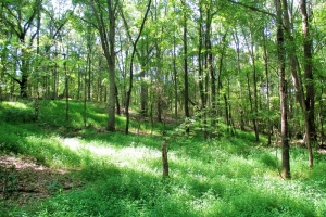 13.25 Acre Wooded Homesite - Laurens County SC