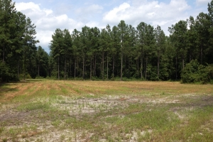 Hunting land for sale SC, SC land for sale (3 of 9)