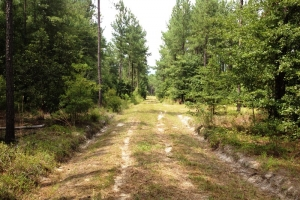 Hunting land for sale SC, SC land for sale (6 of 9)