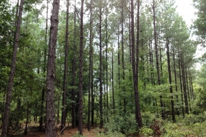 Hunting land for sale SC, SC land for sale (5 of 9)