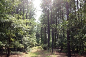 Private Hunting Estate - Hampton County SC