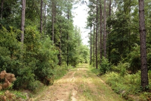 Hunting land for sale SC, SC land for sale (2 of 9)
