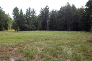 Hunting land for sale SC, SC land for sale (8 of 9)
