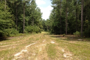 Hunting land for sale SC, SC land for sale (7 of 9)