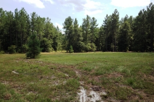 Hunting land for sale SC, SC land for sale (9 of 9)
