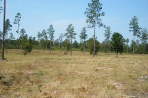 10 Acre Hound Hollow Equestrian Tract - Kershaw County SC