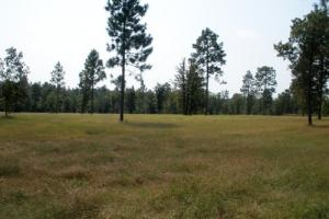 18.32 Acre Hound Hollow Equestrian Land - Kershaw County SC