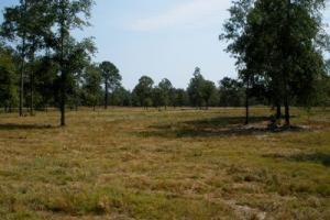 25.04 Acre Hound Hollow Equestrian Land - Kershaw County SC