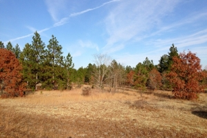 Equestrian or Secluded Estate Tract - Kershaw County SC