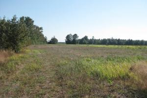 89.5 Acre Timber & Farming Tract in Lee County - Lee County SC