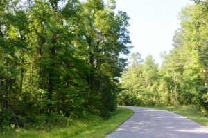 Country Wooded Homesite - Dorchester County SC