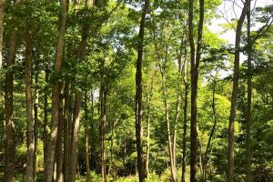 Falling Waters Homesite - Gilmer County GA