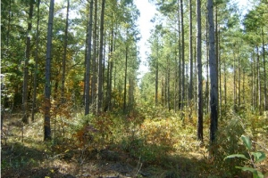 hunting land for sale south carolina, sc hunting land, sc timberland (1 of 4)