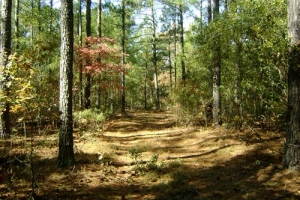 53 Acre Swansea Hunting Land - Lexington County SC