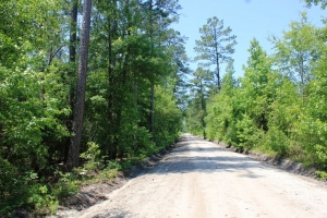 469 Acre Timber Investment - Colleton County SC