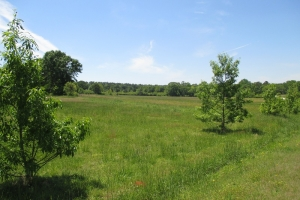 <p>sc homesite for sale, land for sale sc</p>