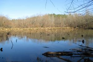 Rabon Creek Hunting & Timber Land - Laurens County SC