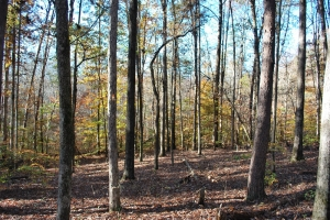Easley Large Acre Homesite - Pickens County SC