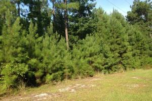 Photo 5 of 17  ·  Development land for sale GA, GA land for sale