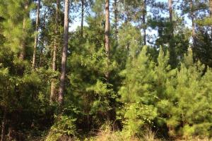 Photo 7 of 17  ·  Development land for sale GA, GA land for sale