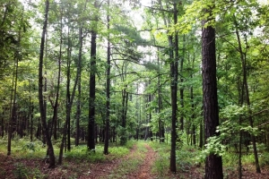 Timber Investment Tract - Talbot County GA