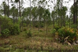 <p>ga land for sale, timber land for sale, hunting land for sale</p>