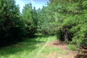 Investment & Recreation Opportunity - Talladega County AL